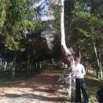 breza010